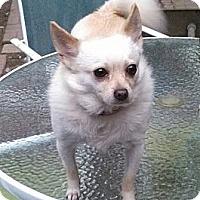 Adopt A Pet :: Maxwell - Lake Butler, FL