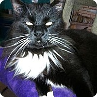 Adopt A Pet :: Yakitty - Harrisburg, NC