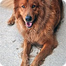 Adopt A Pet :: Alonso