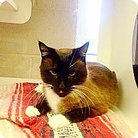 Adopt A Pet :: Raphael - Bentonville, AR