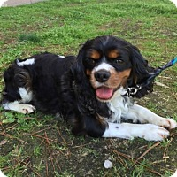 Adopt A Pet :: Frazier - Sugarland, TX