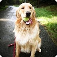 Adopt A Pet :: MIDAS - Van Nuys, CA
