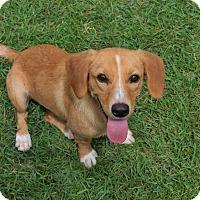 Adopt A Pet :: Becca - Pinehurst, NC