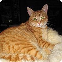 Adopt A Pet :: Alfie - Alamo, CA