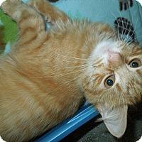 Adopt A Pet :: Leonardo - Medina, OH