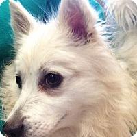 Adopt A Pet :: Regina - Chesterfield, MO