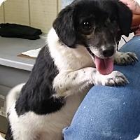 Adopt A Pet :: Helen - Avon, NY