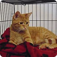 Adopt A Pet :: Cowboy - Jackson, MO
