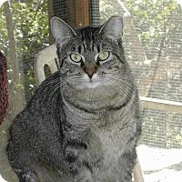 Adopt A Pet :: Penny - Bonita Springs, FL