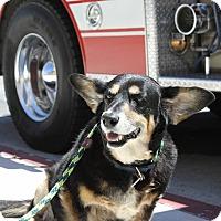 Adopt A Pet :: Augustus Gloop - Los Angeles, CA