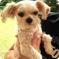 Adopt A Pet :: Jig - Brunswick, ME