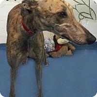 Adopt A Pet :: Dasani - Thornton, CO