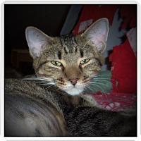 Adopt A Pet :: IVY - Medford, WI