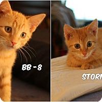 Adopt A Pet :: Storm Trooper & BB-8 - Richmond, VA