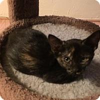 Adopt A Pet :: Lacy - Glendale, AZ
