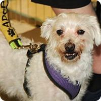 Adopt A Pet :: Einstein (aka Papa) - N. Babylon, NY
