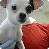 Adopt A Pet :: ABEL - Conroe, TX