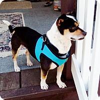 Adopt A Pet :: Freddie - Edisto Island, SC
