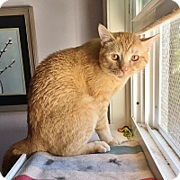 Adopt A Pet :: Neptune - Salisbury, MA