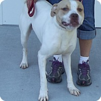Adopt A Pet :: Otis - Cheboygan, MI