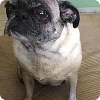 Adopt A Pet :: Lulu - Tustin, CA