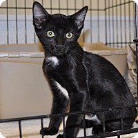 Adopt A Pet :: Clint Black - Sunrise Beach, MO