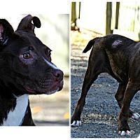 Adopt A Pet :: Bender - Forked River, NJ