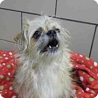 Adopt A Pet :: LYLA - Fort Wayne, IN