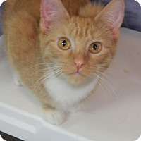 Adopt A Pet :: Butterscotch - Holden, MO
