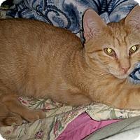 Adopt A Pet :: Olaf - St. Louis, MO