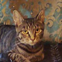 Adopt A Pet :: ANGELINA -Sparkly FURBAll - New York, NY