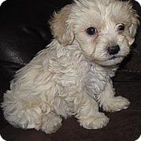 Adopt A Pet :: Corey - La Costa, CA