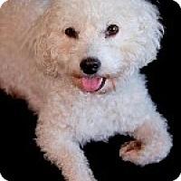 Adopt A Pet :: Cee Cee - La Costa, CA