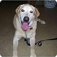 Adopt A Pet :: ASHFORD - La Mesa, CA