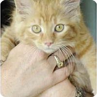 Adopt A Pet :: Dewey - Columbus, OH