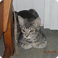 Adopt A Pet :: Gilmore - Riverside, RI