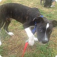 Adopt A Pet :: Tiny - Woodbridge, CT