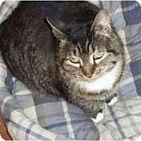 Adopt A Pet :: Cleopatra - Secaucus, NJ