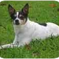 Adopt A Pet :: Squirt - Jacksonville, FL