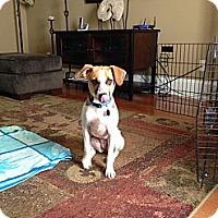 Adopt A Pet :: Abbie - Knoxville, TN