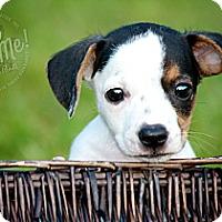 Adopt A Pet :: Fred - Albany, NY