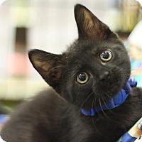 Adopt A Pet :: Louie - Sacramento, CA
