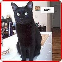 Adopt A Pet :: Rum - Miami, FL