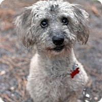 Adopt A Pet :: Ren - Tinton Falls, NJ