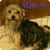 Adopt A Pet :: Weaver - House Springs, MO