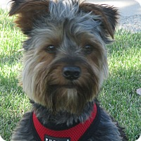 Adopt A Pet :: Buddy - Turlock, CA