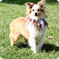 Adopt A Pet :: Mathew - Mission, KS