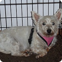 Adopt A Pet :: Gemma-pending adoption - Omaha, NE