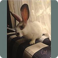 Adopt A Pet :: Cat - Los Angeles, CA