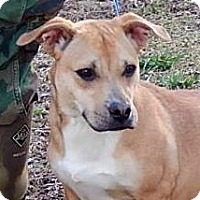Adopt A Pet :: Thumper - Yardley, PA